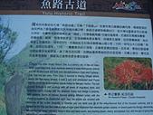 戀戀馬祖之東筥續:DSC02540.JPG
