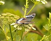 蝴蝶:DSC_5981.JPG