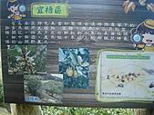 戀戀馬祖之東筥續:DSC02553.JPG