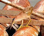 黃小鷺:DSC_4920.JPG