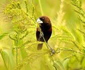 黑頭文鳥:DSC_5221.JPG