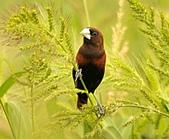 黑頭文鳥:DSC_5224.JPG