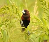黑頭文鳥:DSC_5225.JPG