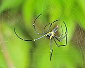 蜘蛛:DSC_0304.JPG
