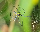 蜘蛛:DSC_0306.JPG