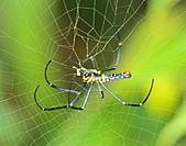 蜘蛛:DSC_0309.JPG