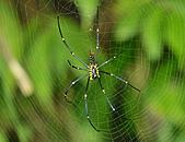 蜘蛛:DSC_0327.JPG