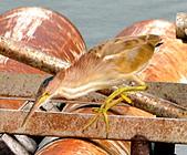 黃小鷺:DSC_4906.JPG
