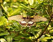 蝴蝶:DSC_5999.JPG