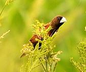 黑頭文鳥:DSC_5133.JPG