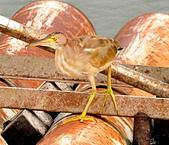 黃小鷺:DSC_4911.JPG