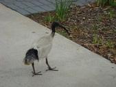 澳洲蜜月之旅 - 20081021:2. 雪梨 - 奧運運動公園013.JPG