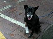 小黑狗:CIMG4948.JPG