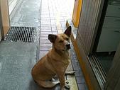 小黑狗:CIMG4947.JPG