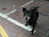 小黑狗:CIMG4954.JPG