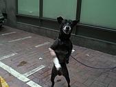 小黑狗:CIMG4952.JPG