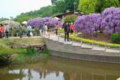 日本南東北行:足利花公園 紫藤