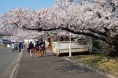 日本南東北行~(二):天童公園-3.jpg