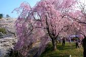日本南東北行~(二):天童公園-4.jpg
