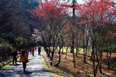 2014露營:2014.0216武陵-05.JPG