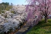 日本南東北行~(二):天童公園-5.jpg