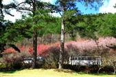 2014露營:2014.0216武陵-06.JPG