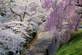 日本南東北行~(二):天童公園-7.jpg