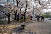 日本南東北行~(二):天童公園-8.jpg