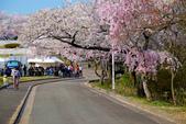日本南東北行~(二):天童公園-9.jpg