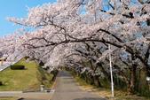 日本南東北行~(二):天童公園-13.jpg
