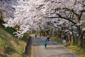 日本南東北行~(二):天童公園-15.jpg