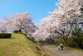 日本南東北行~(二):天童公園-16.jpg