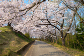 日本南東北行~(二):天童公園-17.jpg