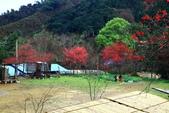 2014露營:2014.02南庄八卦力部落22.JPG