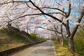 日本南東北行~(二):天童公園-18.jpg