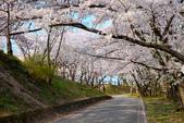 日本南東北行~(二):天童公園-19.jpg