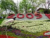980321台北陽明山海芋:98.03.21-2009陽明山花季