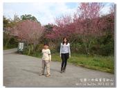 20120228台東太麻里金針山-賞櫻:DSC00975.jpg