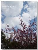20120228台東太麻里金針山-賞櫻:DSC00985.jpg