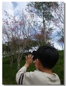 20120228台東太麻里金針山-賞櫻:DSC01024.jpg