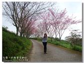 20120228台東太麻里金針山-賞櫻:DSC01037.jpg