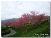 20120228台東太麻里金針山-賞櫻:DSC01048.jpg