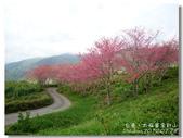20120228台東太麻里金針山-賞櫻:DSC01051.jpg