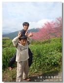 20120228台東太麻里金針山-賞櫻:DSC01055.jpg