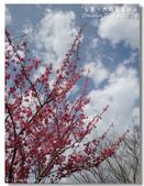 20120228台東太麻里金針山-賞櫻:DSC01059.jpg