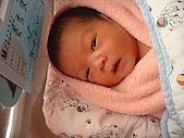 小牛牛ㄟ相簿:20050409(出生第四天)