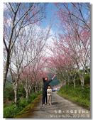 20120228台東太麻里金針山-賞櫻:DSC01078.jpg