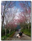 20120228台東太麻里金針山-賞櫻:DSC01085.jpg