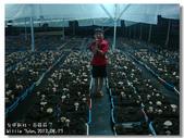 20120817台中新社-百菇莊:DSC04575.jpg