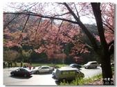 20120225台中武陵農場賞櫻行:DSC00688.jpg